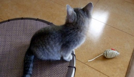 実験用マウスの種類は?価格や飼育はどうやられているのか解説!