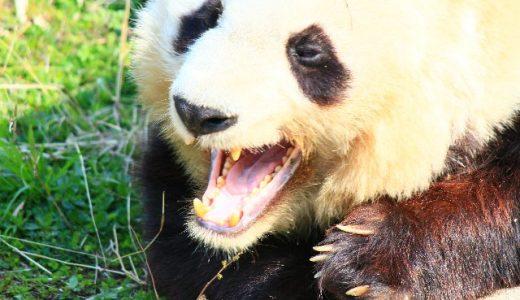 客寄せパンダとはどんな意味?語源と実例を交えて解説!
