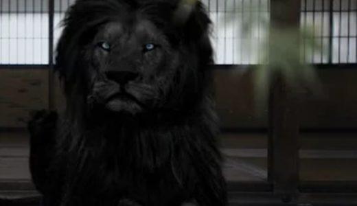 車のCMで出てくる「黒いライオン」は実在する?白いライオンは存在?!